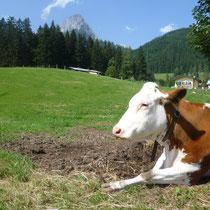 Auch die Kühe genießen die herrliche ruhige Lage