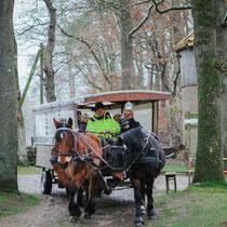 Für den Transport der Gäste zur Erkundung der Gegend während des Events, stellen wir einen sogenannten Heide Express, eine Kutsche als Shuttle zur Verfügung.
