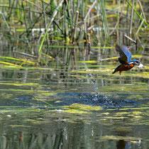 In volo con il pesce