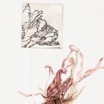 Kleine Pfingstrose, 6,2 x 6,8 cm, Kaltnadelradierung / Aquarell