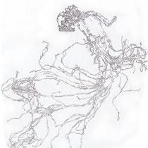 Ginsengwurzel I, 29,5 x 40,0 cm, Zeichnung
