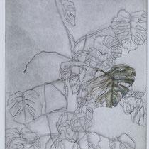 Matissebaum grün, 19,7 x 24,8 cm, Kaltnadelradierung / Aquarell