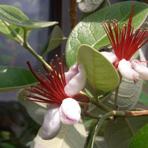 Prächtige Blüten
