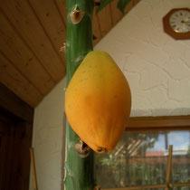 Reife Papayafrucht