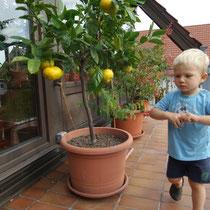 Mandarinenbaum - Sorte Sutsuma mit Enkelkind - Beste Sorte