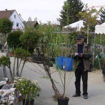 Der Chef bei der Pflanzenregistrierung