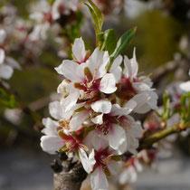 Baumblüte (Exoten)