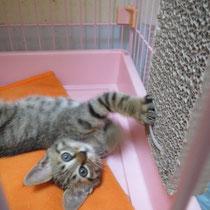 ボイス君 2014年7月3日 大阪へ 名前はアッシ君になりました