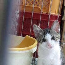 サザエちゃん 2014年8月1日 明石市へ 名前ははるちゃんになりました