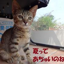 はづきちゃん 2013年8月 尼崎へ