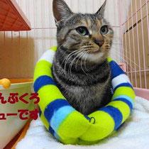 プリちゃん 2014年2月11日 神戸市へ 名前はそのままプリちゃんです