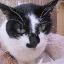 シルクちゃん 2014年1月12日 芦屋市へ 名前はうずまきちゃんになりました