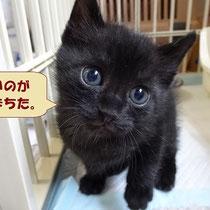 海老蔵君 2014年12月9日 徳島へ 卒業生のショコラちゃんのお家へ