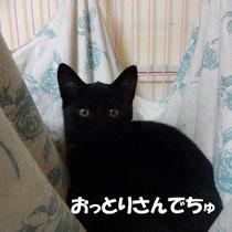 ペコちゃん 2013年10月 京都府へ 名前はさくらちゃんに
