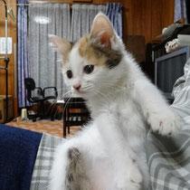 ピンキーちゃん 2014年6月18日 神戸市へ ローズィー、ネイビーと一緒に