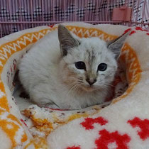ミオンちゃん 2016年11月19日 リバちゃんと一緒に 名前はゆきちゃんになりました