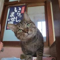 マリン君 2015年5月9日 西宮へ 名前は幸村君になりました