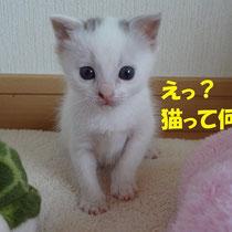 嵐君 2013年4月 徳島市へ 名前は春嵐(はるら)ちゃんに