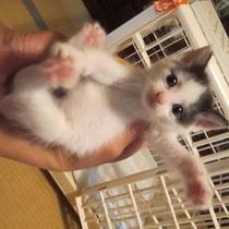 ミルミルちゃん 2015年6月19日 洲本市へフワティちゃんと一緒に 名前はアンジュちゃんになりました