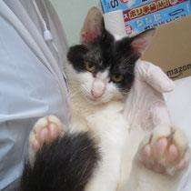 ブンタ君 5月21日 神戸市へ 名前はアポロ君になりました