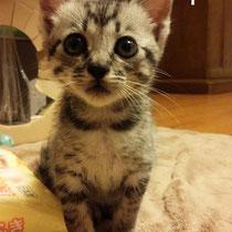 うすちゃん 2014年8月25日 揖保へ名前はゆるちゃんになりました