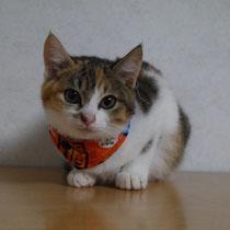 ジュジュちゃん 2016年12月18日 大津へ 名前はそのままジュジュちゃんになりました