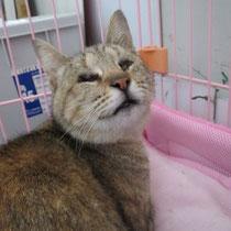 アリスちゃん 2014年3月15日 茨城県へ