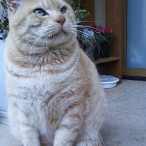 うー君 2014年9月 TNRして地域猫さんから家猫さんに 南あわじ市へ