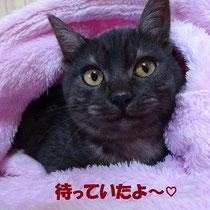 ルリちゃん 2014年1月25日 南あわじ市へ 名前はリコちゃんになりました