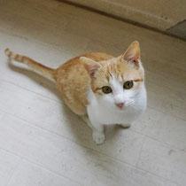 シト君 2018年1月16日 神戸へ フーチちゃんと一緒に 名前は虎之助に