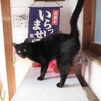 ハルル 2014年4月30日洲本市へ 名前は黒松君になりました