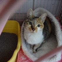 みかちゃん 2015年1月31日 洲本市へ  名前はくりちゃんになりました