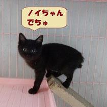 ノイちゃん 2015年7月3日徳島へ 名前はのあちゃんになりました