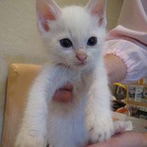テンテン君 2013年12月 加古川市へ 名前はタマちゃんになりました