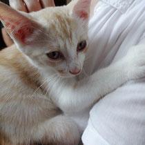 チャテラ君 2014年8月15日 洲本市へ 名前はたまちゃんになりました