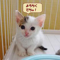 おとちゃん 2016年5月23日 加古川市、卒業生紅葉君のお家へ 名まえはランちゃんになりました