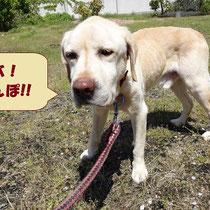 ジャス君 2015年5月3日 山口県へ 名前はジャスミン君になりました