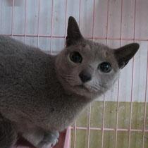 トーマ君 2014年2月24日 大阪へ 名前はフェル君になりました