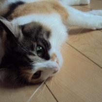 チビ姫  2013年7月 豊中市へ 名前はラナンキュラスちゃんに
