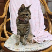 シマちゃん 2014年11月19日 保護主さんに迎えていただけました 倉敷市
