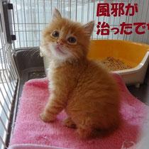 ヨッシー君 2013年6月 大阪へ アグリ君と一緒に