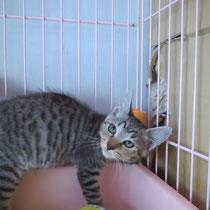 大吉君 2014年8月8日 三重県へ 名前は虎丸くんになりました くろモン君と一緒に