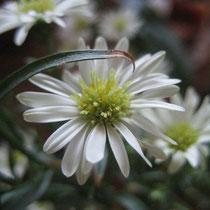Dainty Petals/photo-rharmon