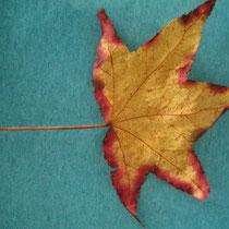 Leaf Study #1/photo-rharmon