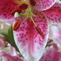 Lily/The Paul Collection/photo -rharmon