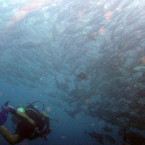 Diving the liberty wreck in Bali