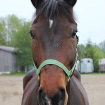 Prinz 2010