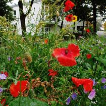Blühstreifen im Jahreslauf