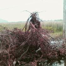 ein Baumstumpf mit der Wurzel nach oben bleibt stehen...