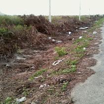 ein Caterpiller entfernt brutal das Buschwerk und der ganze weggeworfene Abfall kommt zum Vorschein